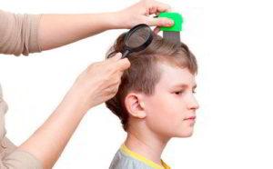 проверка головы ребенка на наличие вшей